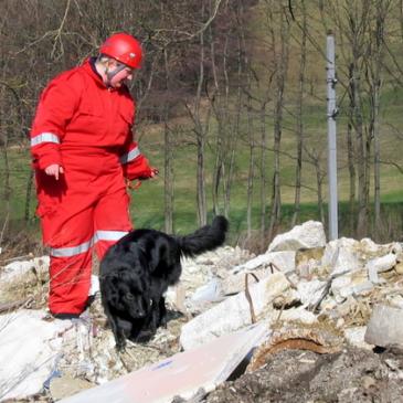 Prova på-dag patrullhund och räddning