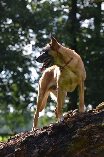 Patrullhundsverksamheten