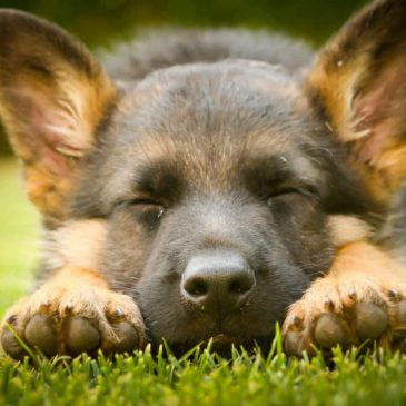 Hundtjänstskolan inställd