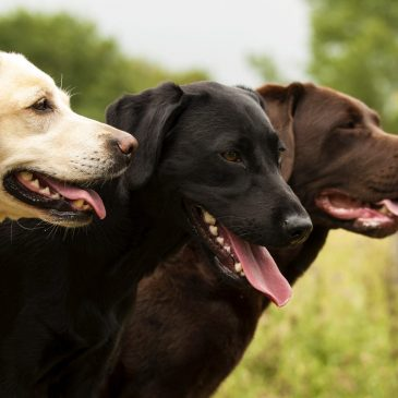 Prova på-dagen för tjänstehund framskjuten